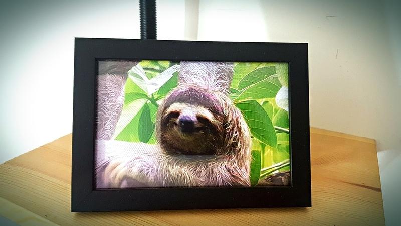 happy-sloth